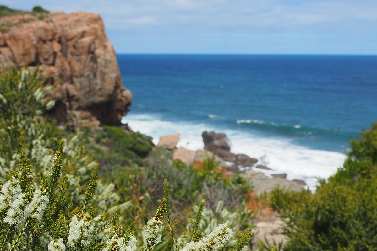 Discover unique Austrlalian flora with Great Walks of Australia on the Margaret River Cape to Cape Walk.