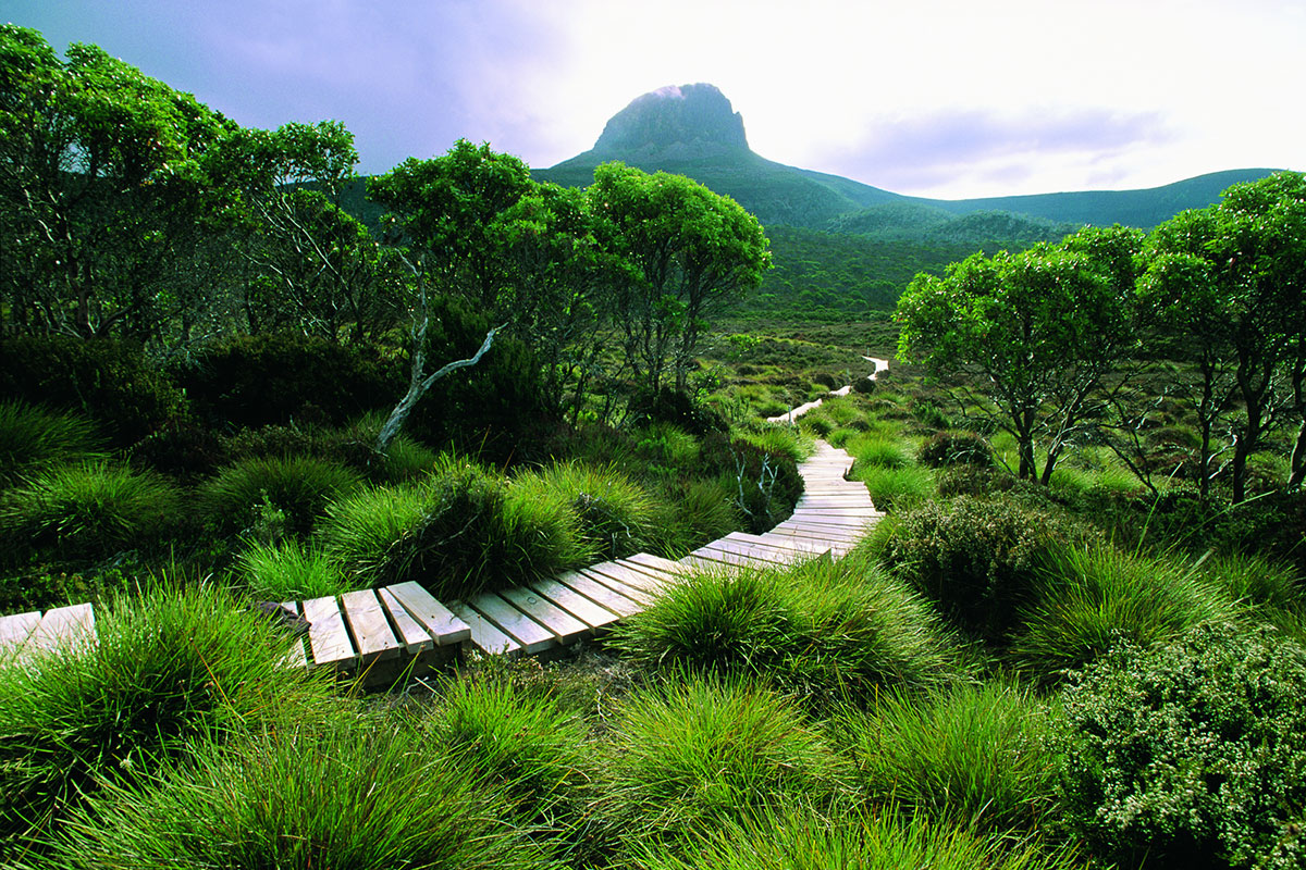 Walk through lush green Tasmanian pastures on the Cradle Mountain Huts Walk.