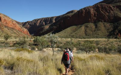 Trail on the Larapinta Trek